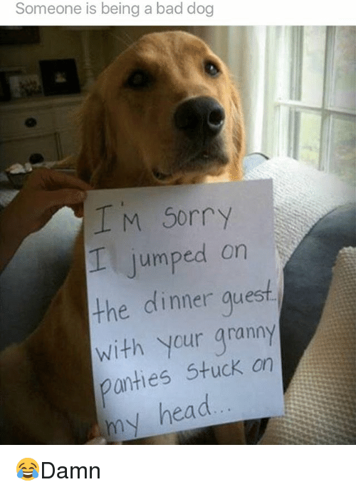 Bad, Head, and Memes: Someone is being a bad dog  I M Sorry  jumped on  the dinner guest  with your granny  anties Stuck on  my head 😂Damn