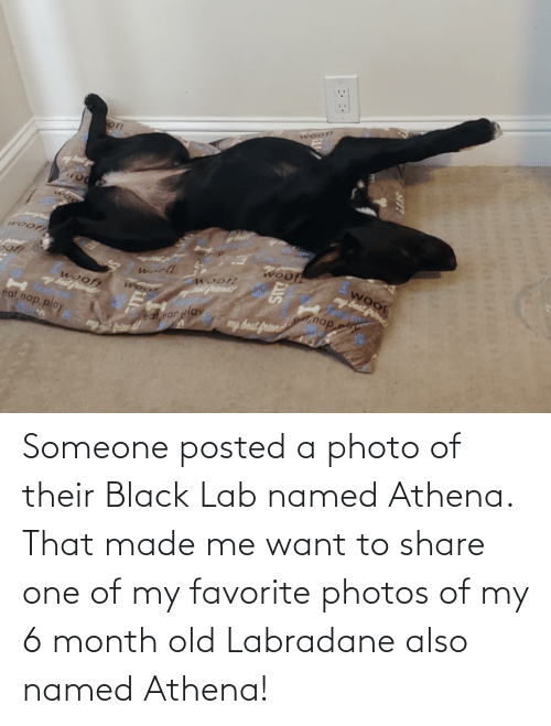 Lab: Someone posted a photo of their Black Lab named Athena. That made me want to share one of my favorite photos of my 6 month old Labradane also named Athena!
