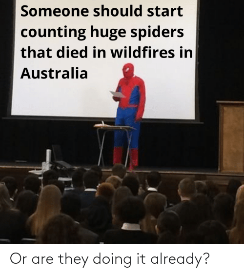 huge spiders: Someone should start  counting huge spiders  that died in wildfires in  Australia Or are they doing it already?
