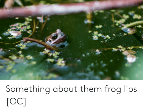 frog: Something about them frog lips [OC]