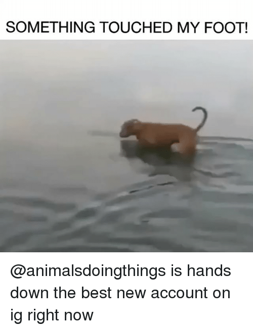 Funny, Best, and Girl Memes: SOMETHING TOUCHED MY FOOT! @animalsdoingthings is hands down the best new account on ig right now
