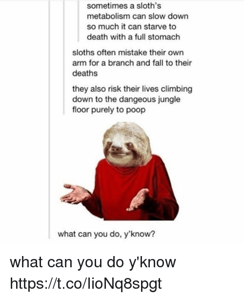 Climbing, Fall, and Poop: sometimes a sloth's  metabolism can slow down  so much it can starve to  death with a full stomach  sloths often mistake their own  arm for a branch and fall to their  deaths  they also risk their lives climbing  down to the dangeous jungle  floor purely to poop  what can you do, y'know? what can you do y'know https://t.co/IioNq8spgt