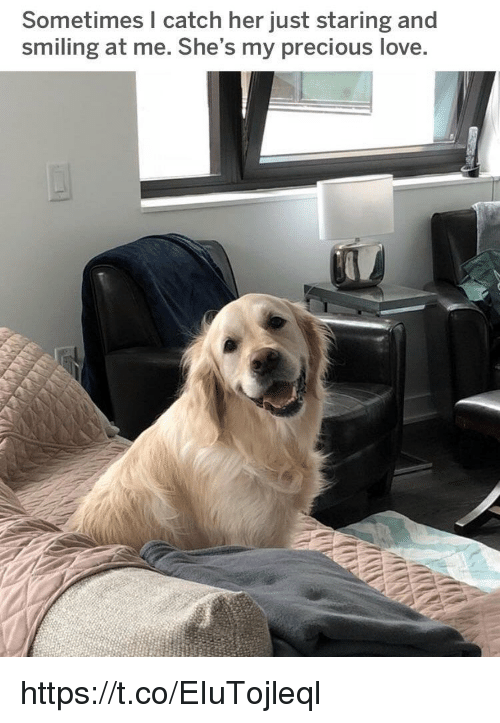 Love, Memes, and Precious: Sometimes I catch her just staring and  smiling at me. She's my precious love https://t.co/EIuTojleql
