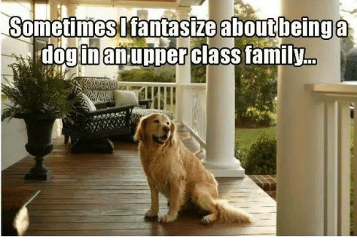 Upper Class Family: Sometimes I fantasize about being a  dog inan upper class family.
