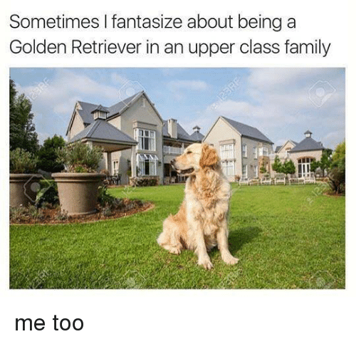 Upper Class Family: Sometimes I fantasize about being a  Golden Retriever in an upper class family me too