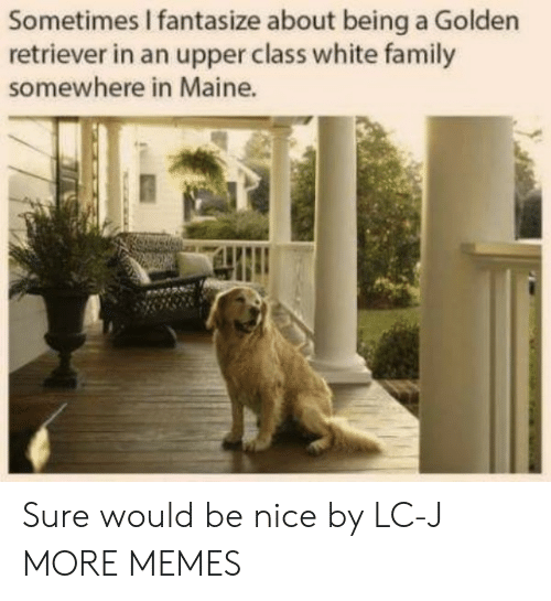 Maine: Sometimes I fantasize about being a Golden  retriever in an upper class white family  somewhere in Maine. Sure would be nice by LC-J MORE MEMES