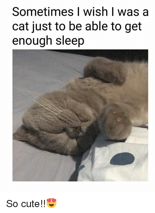 Cute, Memes, and Sleep: Sometimes I wish I was a  cat just to be able to get  enough sleep So cute!!😍