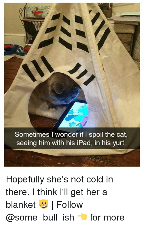 Ipad, Memes, and Cold: Sometimes I wonder if I spoil the cat,  seeing him with his iPad, in his yurt. Hopefully she's not cold in there. I think I'll get her a blanket 😺 | Follow @some_bull_ish 👈 for more