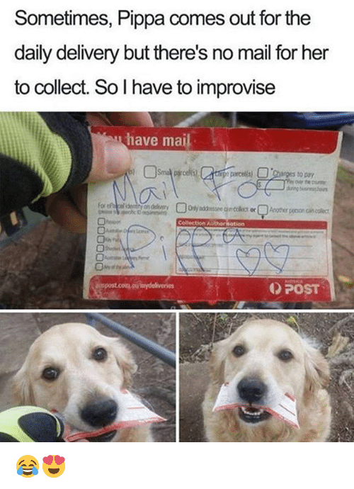 Memes, Mail, and 🤖: Sometimes, Pippa comes out for the  daily delivery but there's no mail for her  to collect. So l have to improvise  have mail  nges to  Collection Author otion  POST 😂😍