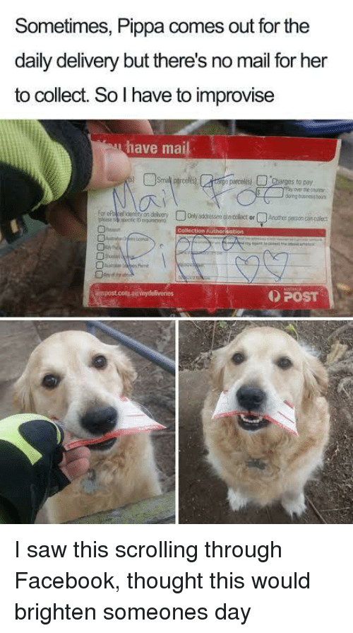Facebook, Saw, and Mail: Sometimes, Pippa comes out for the  daily delivery but there's no mail for her  to collect. So l have to improvise  have mail  duing businesabooun  POST I saw this scrolling through Facebook, thought this would brighten someones day