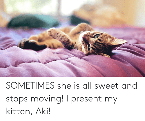 aki: SOMETIMES she is all sweet and stops moving! I present my kitten, Aki!