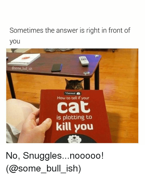 Memes, 🤖, and Oatmeal: Sometimes the answer is right in front of  you  osome bullish  Oatmeal  How to tell if your  Cat  is plotting to  kill you No, Snuggles...nooooo! (@some_bull_ish)