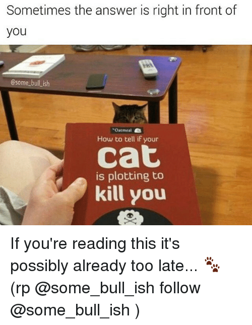 Memes, If Youre Reading This, and 🤖: Sometimes the answer is right in front of  you  @some bull ish  Oatmeal  How to tell if your  Cat  is plotting to  kill you If you're reading this it's possibly already too late... 🐾 (rp @some_bull_ish follow @some_bull_ish )