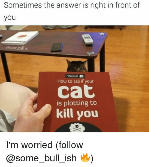 Memes, 🤖, and Answers: Sometimes the answer is right in front of  you  @some bull ish  Oatmeal  How to tell if your  Cat  is plotting to  kill you I'm worried (follow @some_bull_ish 🔥)