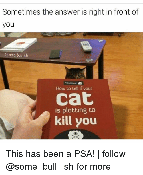 Memes, How To, and Been: Sometimes the answer is right in front of  you  @some bull ish  Oatmeal  How to tell if your  Cat  is plotting to  kill you This has been a PSA! | follow @some_bull_ish for more