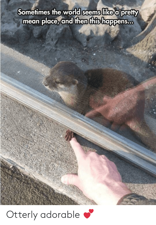 Otterly: Sometimes the world seems like a pretty  mean place,and then this happens. Otterly adorable 💕
