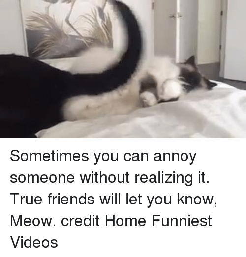 Memes, 🤖, and Meow: Sometimes you can annoy someone without realizing it.   True friends will let you know, Meow.  credit Home Funniest Videos