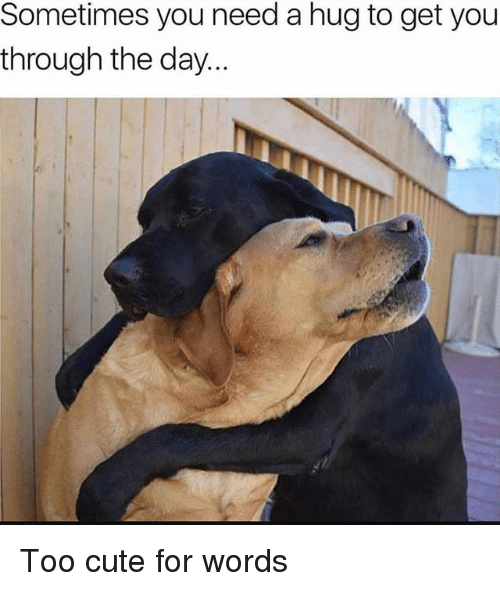 Cute, Girl Memes, and Day: Sometimes you need a hug to get you  through the day Too cute for words