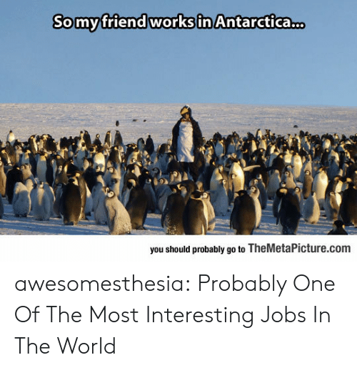 Antarctica: Somyfriend works in Antarctica.  you should probably go to TheMetaPicture.com awesomesthesia:  Probably One Of The Most Interesting Jobs In The World