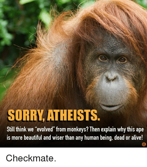 "Alive, Beautiful, and Dank: SORRY, ATHEISTS.  Still think we ""evolved from monkeys? Then explain why this ape  is more beautiful and wiser than any human being, dead or alive! Checkmate."