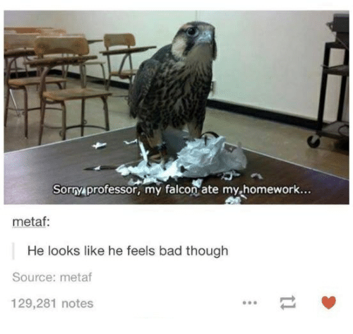 falcone: Sorry professor, my falcon ate my homework..  metaf:  He looks like he feels bad though  Source: metaf  129,281 notes
