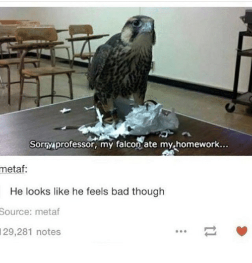falcone: Sorry professor, my falcon ate my homework..  metaf:  He looks like he feels bad though  Source: metaf  29,281 notes