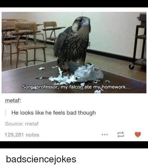 falcone: Sorry professor, my falcon ate my-homework...  metaf  He looks like he feels bad though  Source: metaf  129,281 notes badsciencejokes