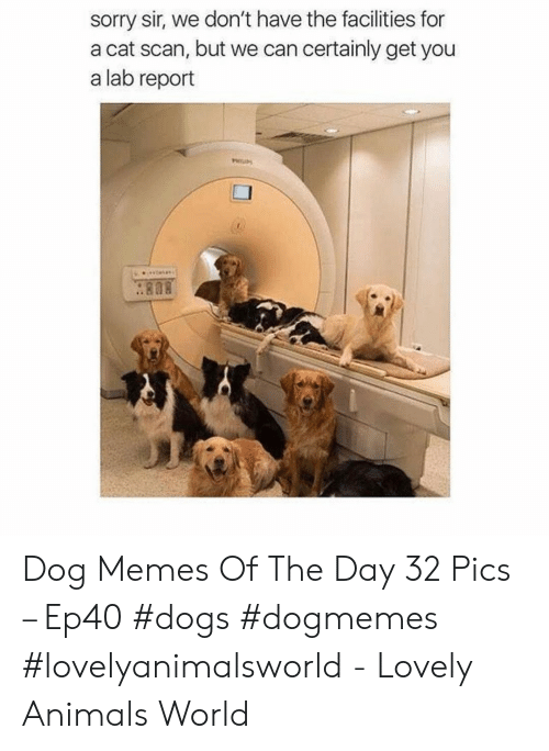 Scan: sorry sir, we don't have the facilities for  a cat scan, but we can certainly get you  a lab report  . 808 Dog Memes Of The Day 32 Pics – Ep40 #dogs #dogmemes #lovelyanimalsworld - Lovely Animals World