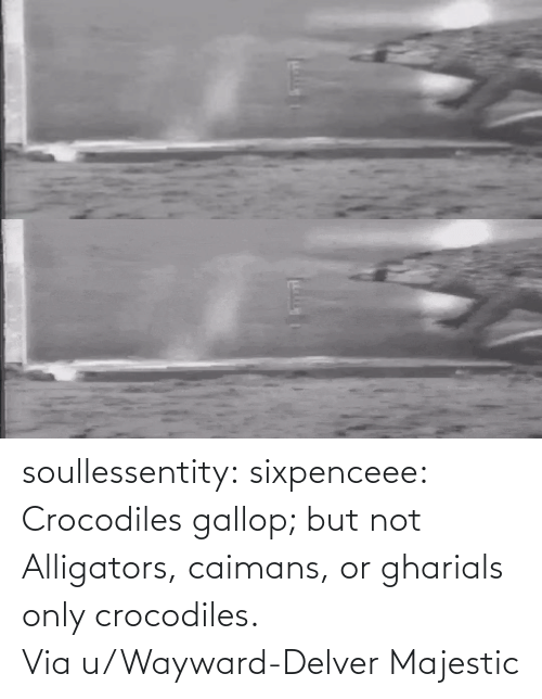 user: soullessentity: sixpenceee: Crocodiles gallop; but not Alligators, caimans, or gharials only crocodiles. Via u/Wayward-Delver Majestic