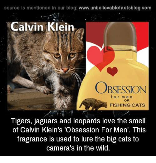 Big Cats Like Calvin Klien
