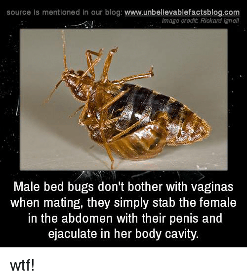 Memes, Blog, and 🤖: source Is mentioned In our blog  www.unbelievablefactsblog.com  Image credit Rickard lgnell  Male bed bugs don't bother with vaginas  When mating, they simply stab the female  in the abdomen with their penis and  ejaculate in her body cavity. wtf!