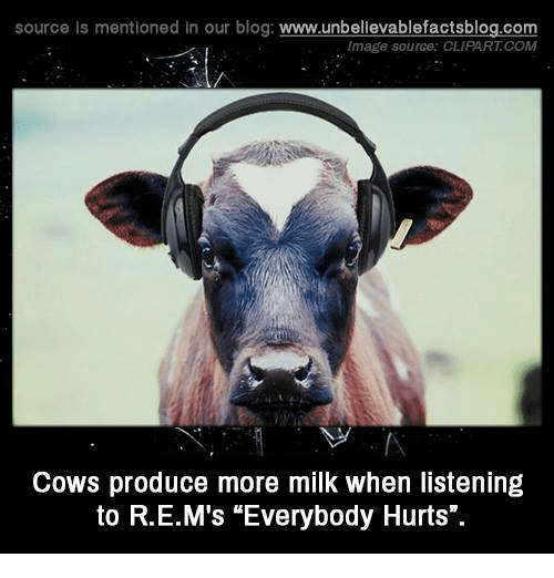 "clipart: source Is mentioned In our blog  www.unbelievablefactsblog.com  Image source: CLIPART COM  Cows produce more milk when listening  to R.E.M's ""Everybody Hurts"""
