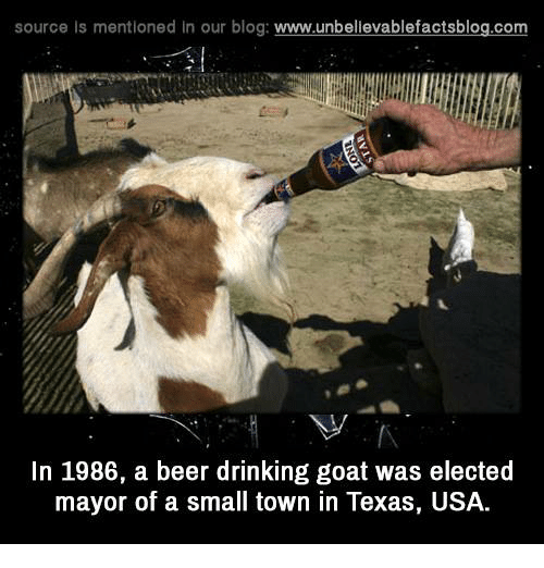 Texas: source Is mentioned In our blog  www.unbelievablefactsblog.com  In 1986, a beer drinking goat was elected  mayor of a small town in Texas, USA.