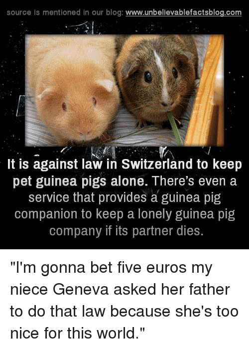 "Memes, Euro, and Blog: source is mentioned in our blog  www.unbelievablefactsblog.com  It is against law in Switzerland to keep  pet guinea pigs alone. There's even a  service that provides a guinea pig  companion to keep a lonely guinea pig  company if its partner dies. ""I'm gonna bet five euros my niece Geneva asked her father to do that law because she's too nice for this world."""