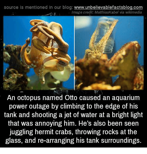 Climbing, Memes, and Aquarium: source Is mentioned in our blog: www.unbellevablefactsblog.co  Image credit: MatthiasKabel via wikimedia  An octopus named Otto caused an aquarium  power outage by climbing to the edge of his  tank and shooting a jet of water at a bright light  that was annoying him. He's also been seen  juggling hermit crabs, throwing rocks at the  glass, and re-arranging his tank surroundings.