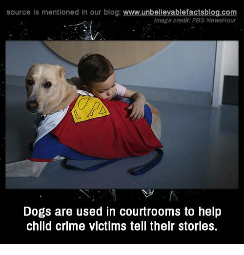 Crime, Dogs, and Memes: source Is mentioned in our blog: www.unbellevablefactsblog.com  Image credit: PBS NewsHour  Dogs are used in courtrooms to help  child crime victims tell their stories