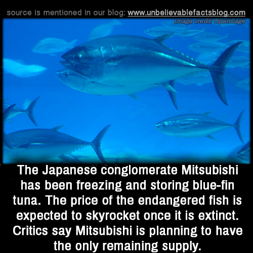 tuna: source is mentioned in our blog: www.unbellevablefactsblog.com  The Japanese conglomerate Mitsubishi  has been freezing and storing blue-fin  tuna. The price of the endangered fish is  expected to skyrocket once it is extinct.  Critics say Mitsubishi is planning to have  the only remaining supply.