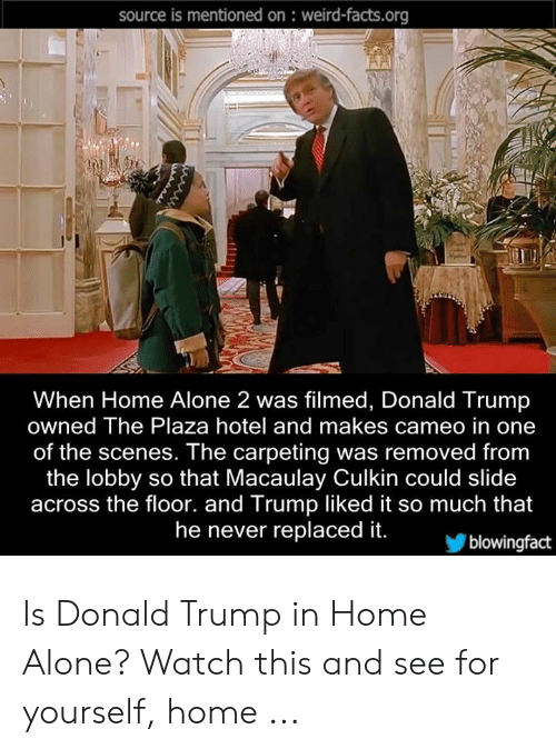 Donald Trump In Home Alone: source is mentioned on : weird-facts.org  When Home Alone 2 was filmed, Donald Trump  owned The Plaza hotel and makes cameo in one  of the scenes. The carpeting was removed from  the lobby so that Macaulay Culkin could slide  across the floor. and Trump liked it so much that  he never replaced it.  blowingfact Is Donald Trump in Home Alone? Watch this and see for yourself, home ...