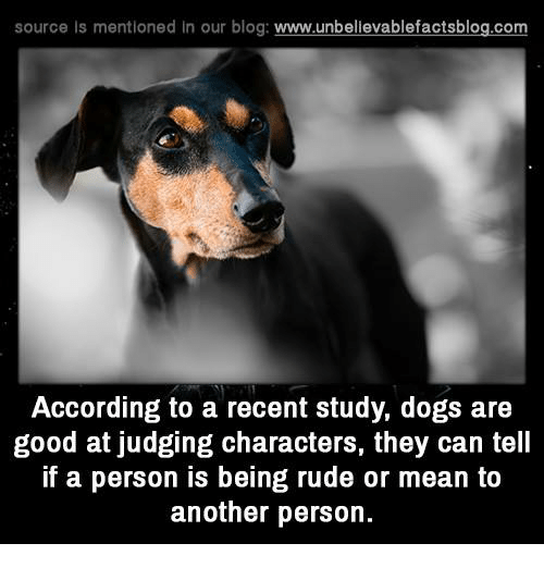 Memes, Rude, and Blog: source ls mentioned in our blog  www.unbelievablefactsblog.com  According to a recent study, dogs are  good at judging characters, they can tell  if a person is being rude or mean to  another person.