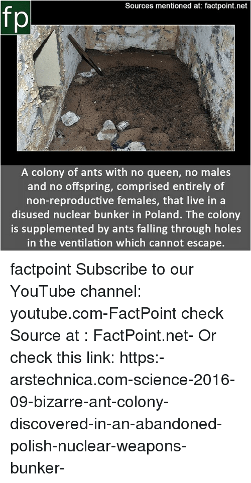 Memes, youtube.com, and Queen: Sources mentioned at: factpoint.net  fp  A colony of ants with no queen, no males  and no offspring, comprised entirely of  non-reproductive females, that live in a  disused nuclear bunker in Poland. The colony  is supplemented by ants falling through holes  in the ventilation which cannot escape. factpoint Subscribe to our YouTube channel: youtube.com-FactPoint check Source at : FactPoint.net- Or check this link: https:-arstechnica.com-science-2016-09-bizarre-ant-colony-discovered-in-an-abandoned-polish-nuclear-weapons-bunker-