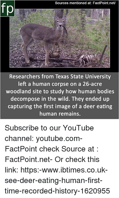Bodies , Deer, and Memes: Sources mentioned at: FactPoint.net/  fp  Researchers from Texas State University  left a human corpse on a 26-acre  woodland site to study how human bodies  decompose in the wild. They ended up  capturing the first image of a deer eating  human remains. Subscribe to our YouTube channel: youtube.com-FactPoint check Source at : FactPoint.net- Or check this link: https:-www.ibtimes.co.uk-see-deer-eating-human-first-time-recorded-history-1620955