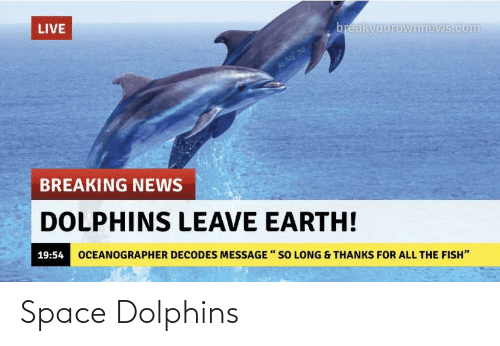 Dolphins: Space Dolphins