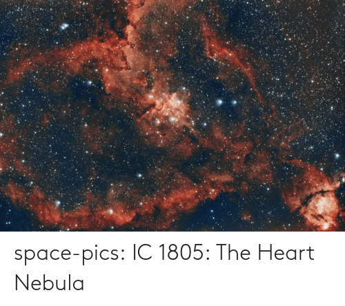 the heart: space-pics:  IC 1805: The Heart Nebula