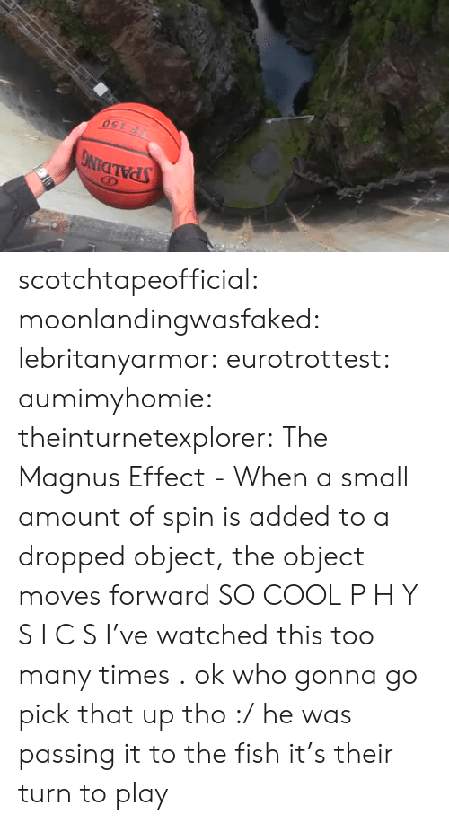 spalding: SPALDING  150 scotchtapeofficial: moonlandingwasfaked:   lebritanyarmor:  eurotrottest:   aumimyhomie:    theinturnetexplorer:    The Magnus Effect - When a small amount of spin is added to a dropped object, the object moves forward   SO COOL   P H Y S I C S   I've watched this too many times .   ok who gonna go pick that up tho :/   he was passing it to the fish it's their turn to play