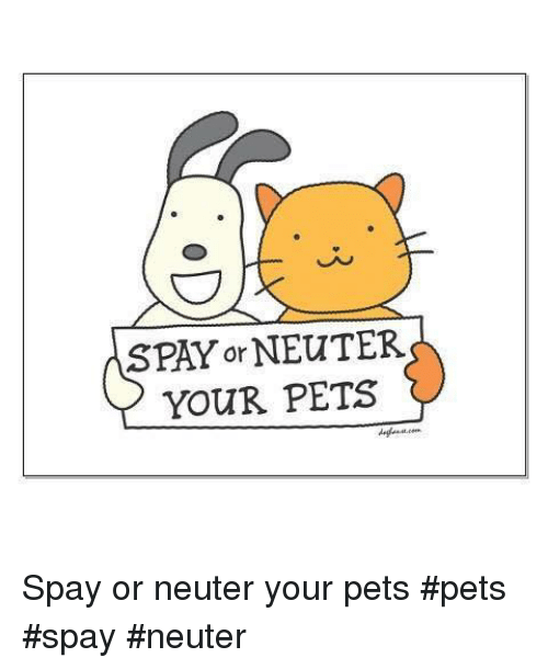 Memes, Pets, and 🤖: SPAY or NEUTER  YOUR PETS Spay or neuter your pets        #pets #spay #neuter