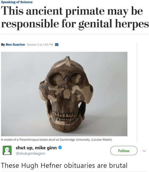 herpes: Speaking of Science  This ancient primate may be  responsible for genital herpes  By Ben Guarino October 2 at 1:30 PM  A model of a Paranthropus boisei skull at Cambridge University. (Lou ise Walsh)   shut up, mike ginn  Follow  @shutupmikeginn  These Hugh Hefner obituaries are brutal