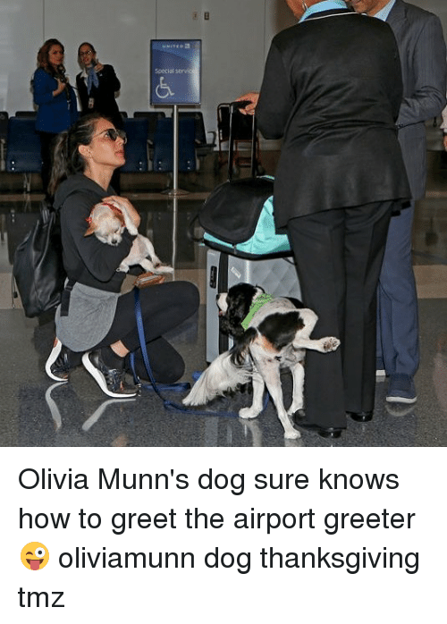Memes, Thanksgiving, and How To: Special Olivia Munn's dog sure knows how to greet the airport greeter 😜 oliviamunn dog thanksgiving tmz