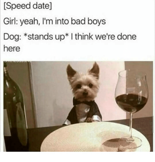 Dog speed dating