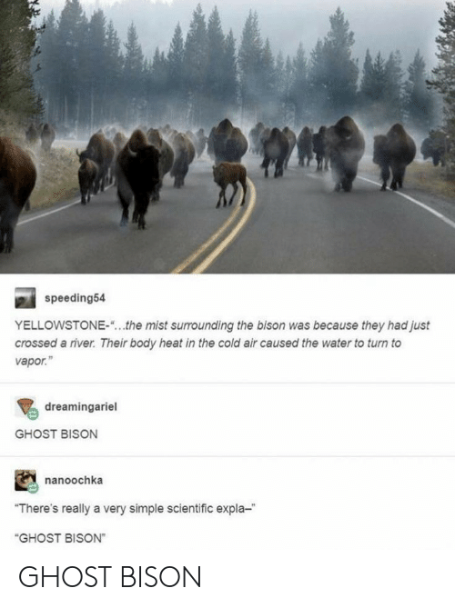 """river: speeding54  YELLOWSTONE-  the mist surrounding the bison was because they had just  crossed a river. Their body heat in the cold air caused the water to turn to  vapor.""""  dreamingariel  GHOST BISON  nanoochka  """"There's really a very simple scientific expla-  """"GHOST BISON"""" GHOST BISON"""