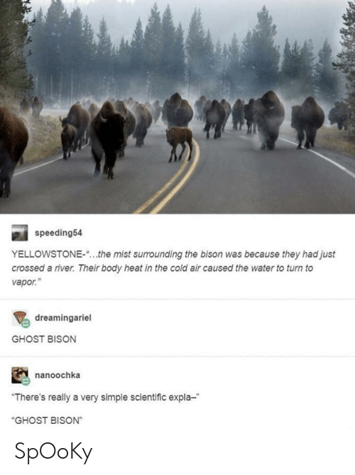"""bison: speeding54  YELLOWSTONE-""""...the mist surrounding the bison was because they had just  crossed a river. Their body heat in the cold air caused the water to turn to  vapor.""""  dreamingariel  GHOST BISON  nanoochka  """"There's really a very simple scientific expla-  """"GHOST BISON"""" SpOoKy"""